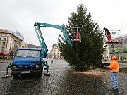 Vánoční strom na Mírové náměstí v Ústí nad Labem daroval Milan Grund z Valkeřic na Děčínsku.