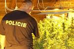 Pěstírnu marihuany objevili děčínští policisté v bývalé hospodě ve čtvrti Horní Oldřichov.