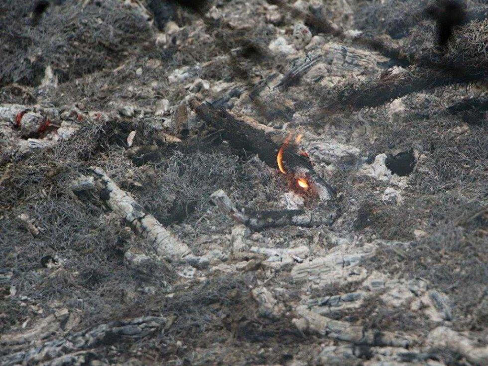 Požár lesa nad Bynovským sídlištěm