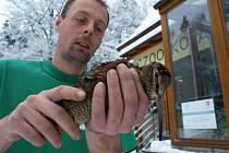 Místo do teplých krajin zavítala sluka do děčínské zoo