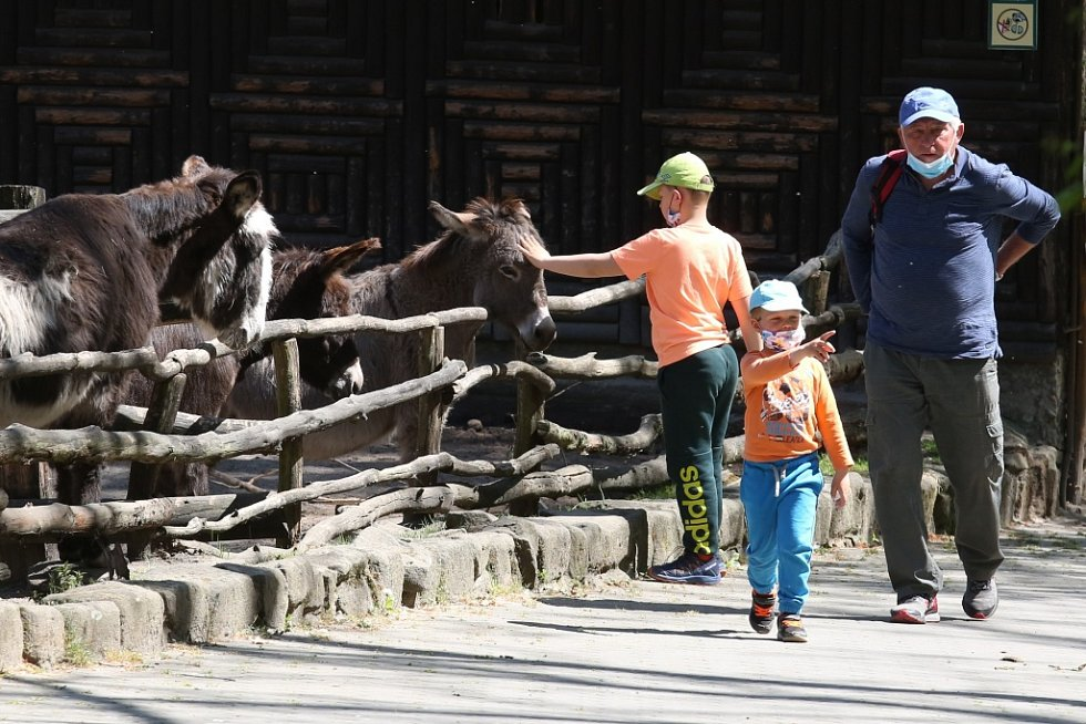 Děčínská zoologická zahrada se otevřela pro návštěvníky. Mohou se, ale pohybovat pouze ve venkovních prostorech.