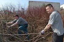 Stanislav a Honza se společně s dalšími teplickými vězni postarali o úklid větví a spousty odpadků.