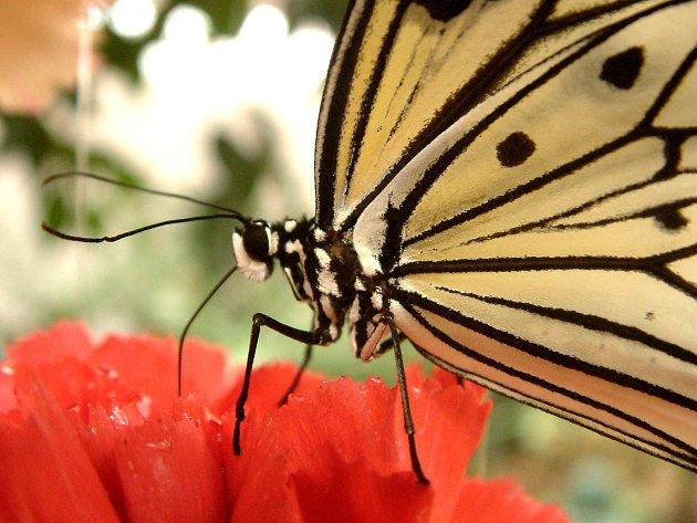 Motýlí dům nabízí přes 30 druhů motýlů i další zvířata.