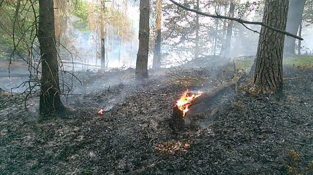 Ve Vysoké Lípě u Jetřichovic hoří les.