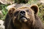 Ke správné oslavě patří dort. A toho se medvěd ke svým třicátým narozeninám v zoo dočkal.