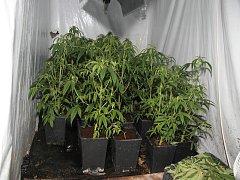 Několik desítek vzrostlých rostlin marihuany, kilogramy nasušené drogy a veškeré vybavení pro její pěstování nalezli ve čtvrtek dopoledne rumburští kriminalisté ve dvou objektech v ulici Jiřího z Poděbrad ve Varnsdorfu.