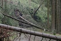 Vichřice na Krásnolipsku způsobily potíže nejen v lesích, ale i nemocným lidem, závislým na elektřině.