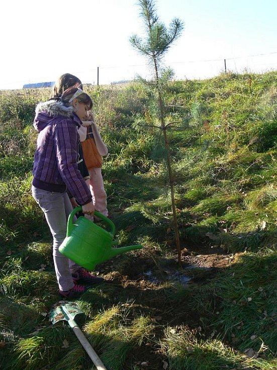 Stromy přátelství nyní rostou v Krásné Lípě.
