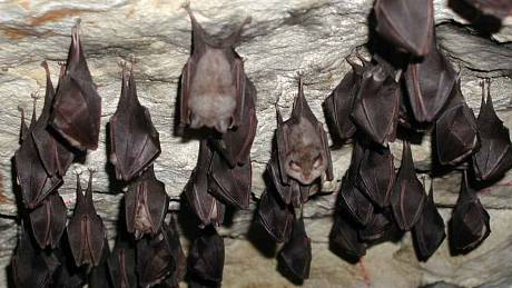 Jeskyně v Labských pískovcích jsou častým útočištěm netopýrů při jejich zimním spánku. Pokud je někdo ze zimního spánku probudí, může je nevědomky zabít.