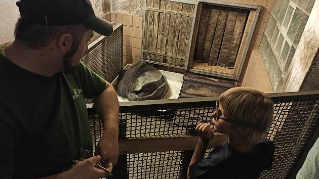 Děti si noc v Zoo užily, dozvěděly se celou řadu zajímavých informací.