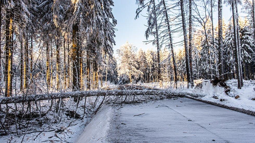 Likvidace stromu na silnici u Varnsdorfu.