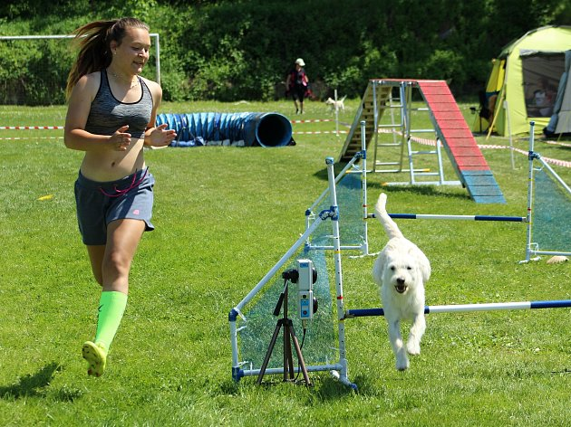 Psí závodníci se utkali v agility