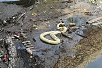 Mrtvý had v Ploučnici.