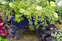 Zahrada Čech letos proběhne v plánované termínu.