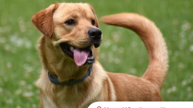 Pes s obojkem s antiparazitními účinky.