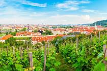 Svatováclavská vinice na Pražském hradě