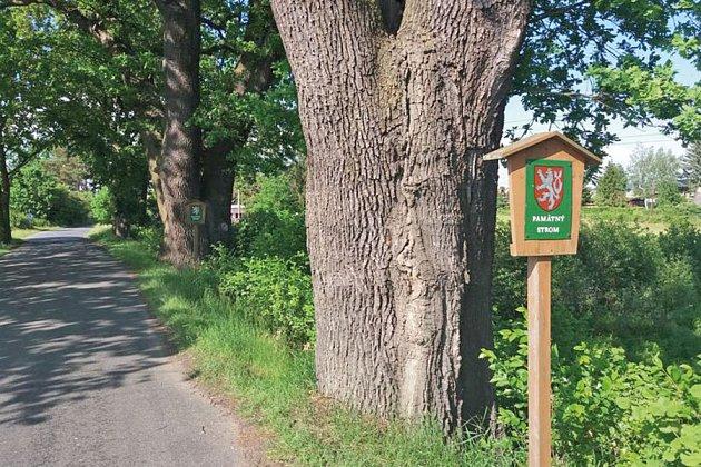 Chráněné stromy.