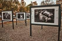 Fotografie z Galerie pod širým nebem na Studentském náměstí