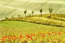Letní Flora Olomouc