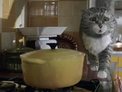 Kočka Mog