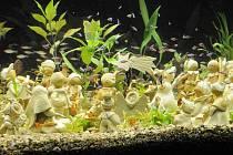 V Rychnově nad Kněžnou je k vidění speciální betlém v akváriu. Vytvořili jej Aleš a Jiřina Sekovi ze Svitav.