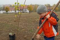 POROSTOU SPOLEČNĚ. Jedním z prvních, kteří si zasadili svůj strom, byl i malý Kuba z Jirkova s otcem. Jejich lípa bude součástí aleje ve skanzenu Stará Ves.