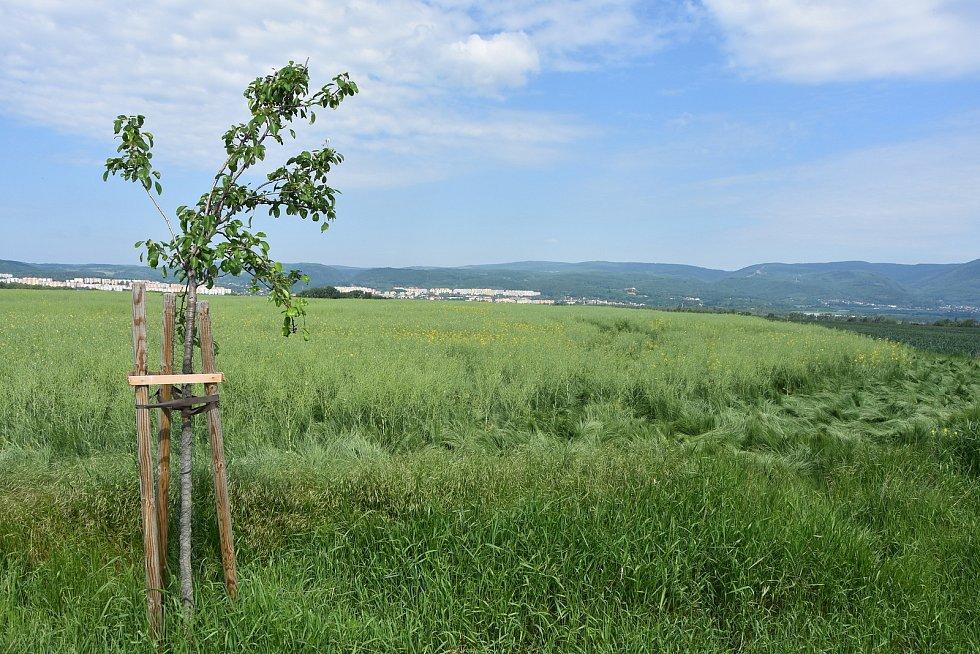 Řada ovocných stromů vysázená v Pesvicích má pokračovat i na území Vrskmaně.