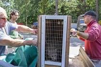 Mladou rysí samici Nyu právě v přepravním boxu naložili na nákladní vůz, aby se vydala do nového domova v maďarské zoologické zahradě v Miskolci. Už dříve opustil chomutovský domov i její bratr, samec Muspy. Nový našel v německém Magdeburgu.