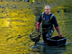 S desetidenním předstihem začali rybáři vypouštět rybník v areálu zámku Červený hrádek. V sobotu pak finále výlovu sledovaly stovky lidí, na břeh putovalo odhadem 1,2 tuny ryb. Byl o něj veliký zájem, kapr se prodával za 70 Kč za kilogram.