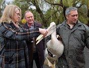 Zleva ředitelka zooparku Iveta Rabasová, velvyslanec Chile Pablo Rodrigo Gaete Vidal a chovatel Toša Stojanov při křtu pelikána.