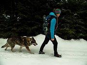 Monitoring vlků v zimě.