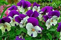 Zákaz se vztahuje na odběry pro účely zalévání zahrad, hřišť a trávníků, mytí aut, napouštění nádrží, bazénů apod.
