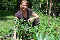 Iniciátorka komunitní zahrady Jana Benešová mezi prvními výpěstky v zadním traktu Základní umělecké školy v Chomutově. Tady spolek Zelená komunitní zahrada buduje svou zahradu, kterou nabízí k využití i dalším obyvatelům města.