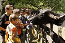 Krmení buvolů v chomutovském zooparku. Ilustrační foto.