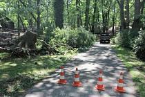 V zooparku odborníci ošetřují stromy, pro vzácné brouky vzniknou broukoviště