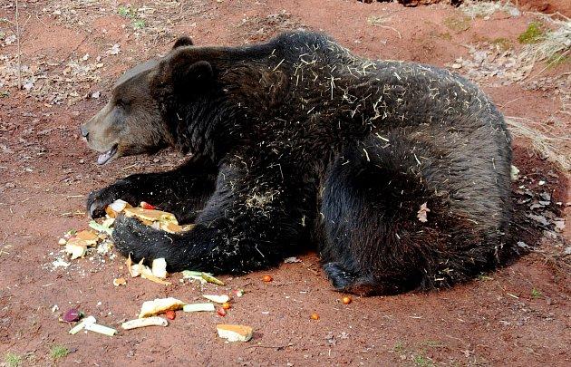 V chomutovském zooparku sladce probudili medvědy.