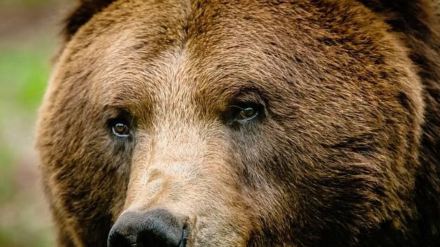 Chomutovský zoopark přišel o Nera, nejstaršího ze čtyř medvědů