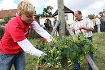 """Na snímku zdobí """"horu"""" chmelem pracovníci kadaňské radnice Miroslav Jančák (vlevo) a Jiří Frajt. Tento dřevěný ozdobený kůl ve tvaru kříže má vinici a úrodu chránit."""