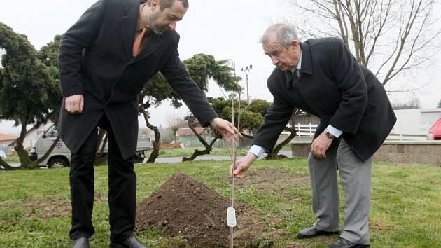 Starosta Eppendorfu a starosta Pavel Bursa (vpravo) strom zasadili společně.