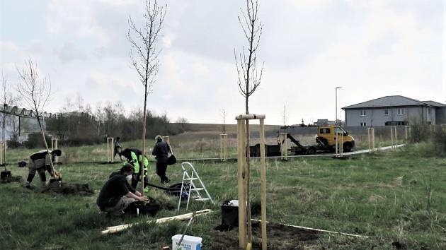 Dávno tomu, co zde Kadaňští pěstovali vinnou révu, dnes v  lokalitě zvané Vinohrady zakořeňují nové okrasné hrušně.