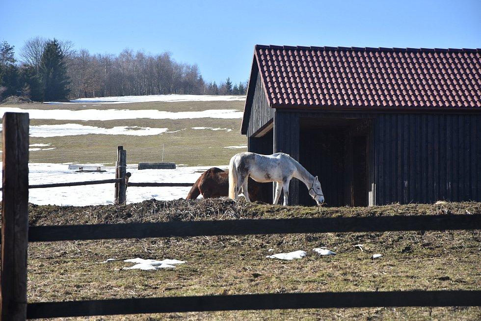 Koně na horské pastvině v Radenově u obce Blatno.