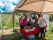 Ve Stranné otevřeli vinice.