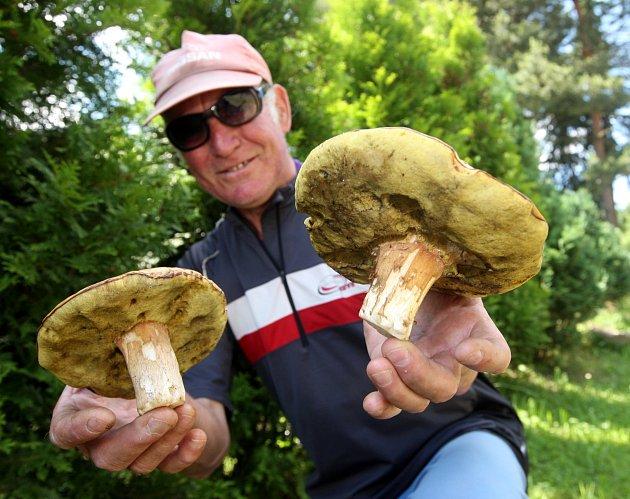 Z lesů v okolí Pyšné na Chomutovsku si odnesl velké hřiby a kozáky Václav Hatta z Chomutova, který v Pyšné už má své houbařské místečko. Je to už sice pár dnů, ale na houby můžete vyrazit i teď.