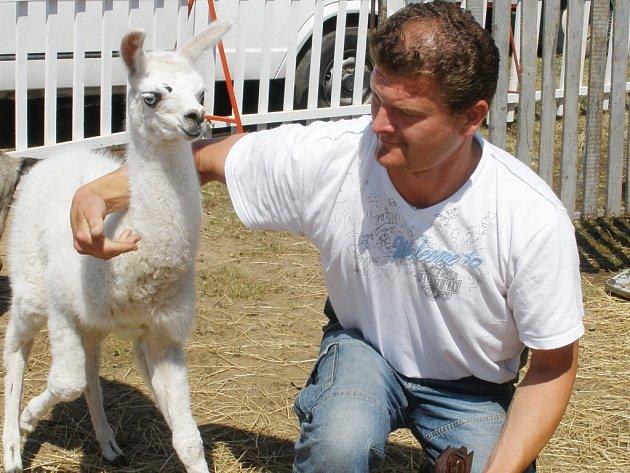 BEROUSEK. Ludvík Beroiusek mladší s nejmaldším mládětem lamy.
