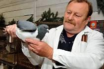 Miroslav Pelíšek se svým holubem plemene moravský pštros modrý. Na výstavě za něj získal čestnou cenu.