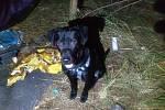Mladý pár nocoval více než měsíc pod stanem. S sebou měl dcerku a dva psy.