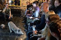 Dražba dětských kreseb a výtvarníků s rysím motivem,proběhla v restauraci Republika v Chomutově.Návštěvníky potěšil i rysí kocourek Rýša, který se nechal i pohladit.