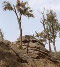Úhošť: Z hory se otevírají nečekané výhledy. Je to taková přírodní rozhledna.