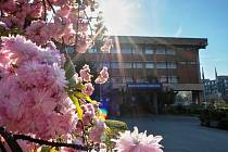 Jaro v Chomutově