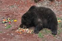 Probouzení medvědů v Podkrušnohorském zooparku a oslava 20 let.